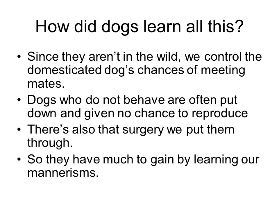 How did dogs learn all this.