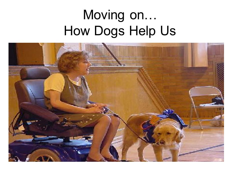 Moving on… How Dogs Help Us