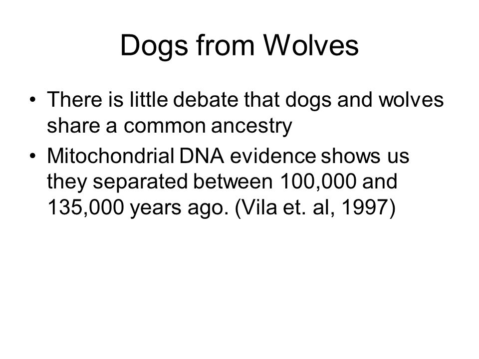 Dogs from Wolves There is little debate that dogs and wolves share a common ancestry Mitochondrial DNA evidence shows us they separated between 100,000 and 135,000 years ago.