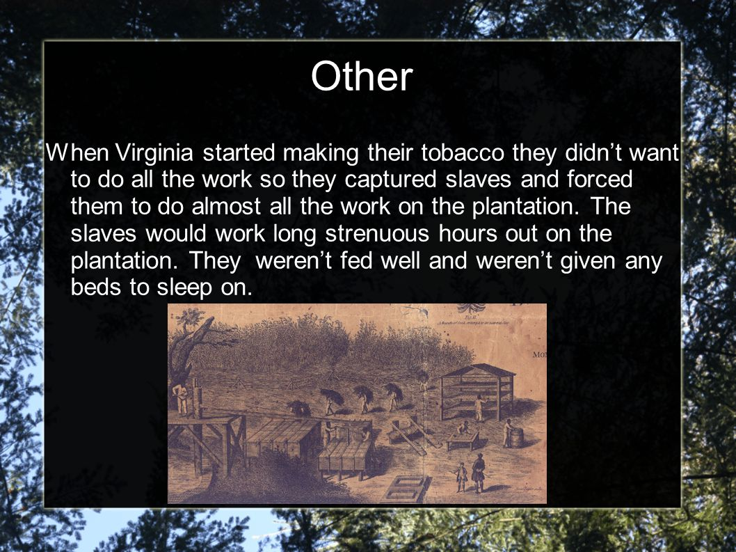 Other When Virginia started making their tobacco they didn't want to do all the work so they captured slaves and forced them to do almost all the work on the plantation.