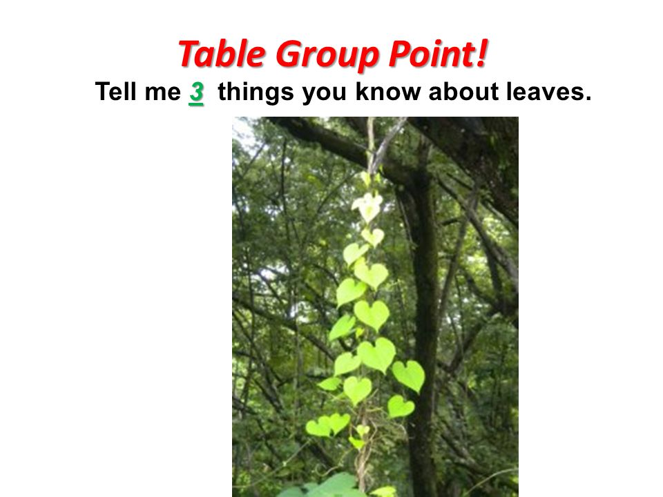 Table Group Point! 3 Tell me 3 things you know about leaves.