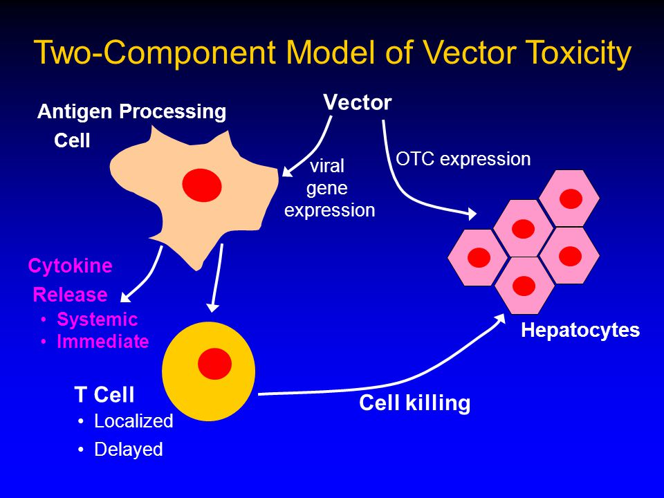 Vector Antigen Processing Cell Hepatocytes T Cell Cell killing Two-Component Model of Vector Toxicity Localized Delayed OTC expression viral gene expression Cytokine Release Systemic Immediate