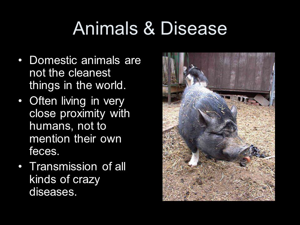 Animals & Disease Domestic animals are not the cleanest things in the world. Often living in very close proximity with humans, not to mention their ow
