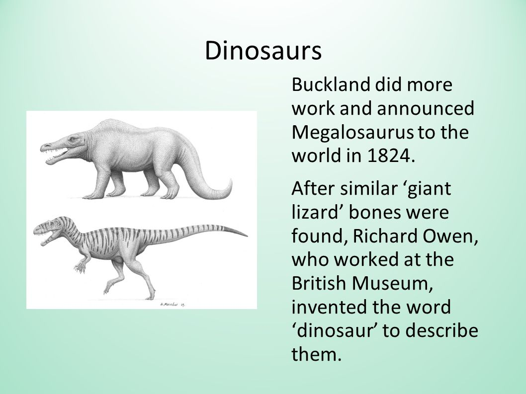 Dinosaurs Buckland did more work and announced Megalosaurus to the world in 1824. After similar 'giant lizard' bones were found, Richard Owen, who wor