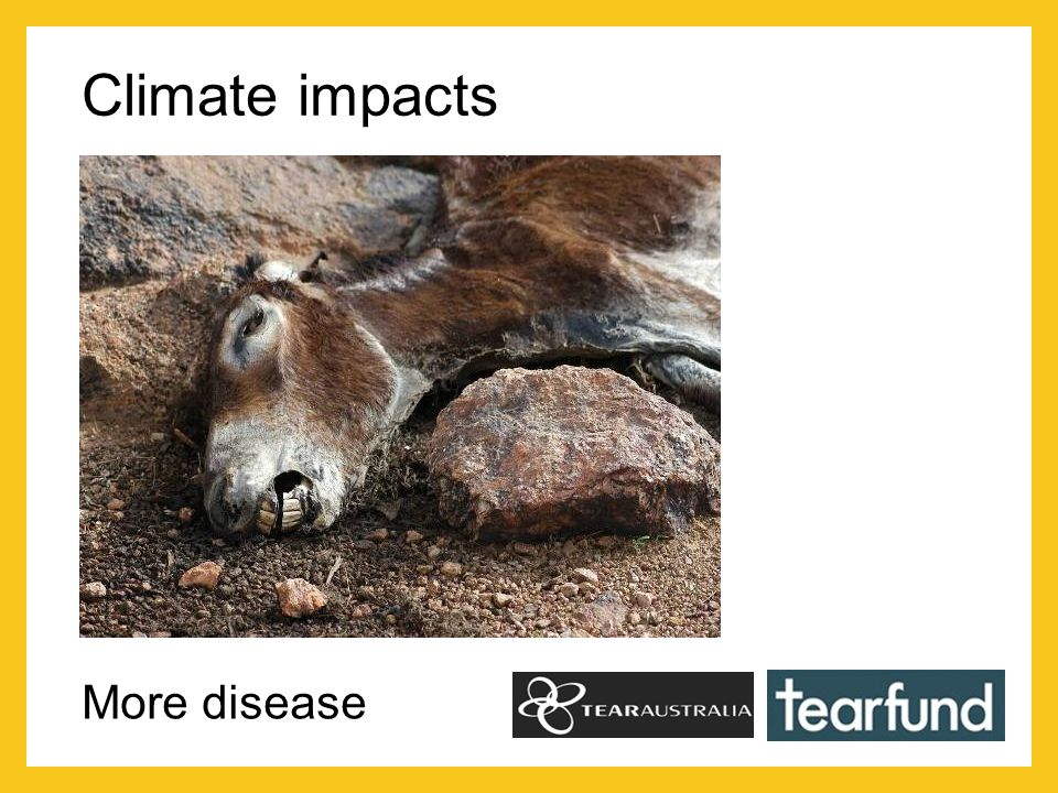 Climate impacts More disease