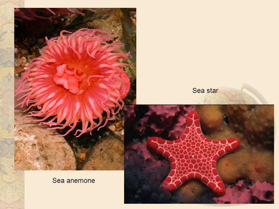 Sea anemone Sea star