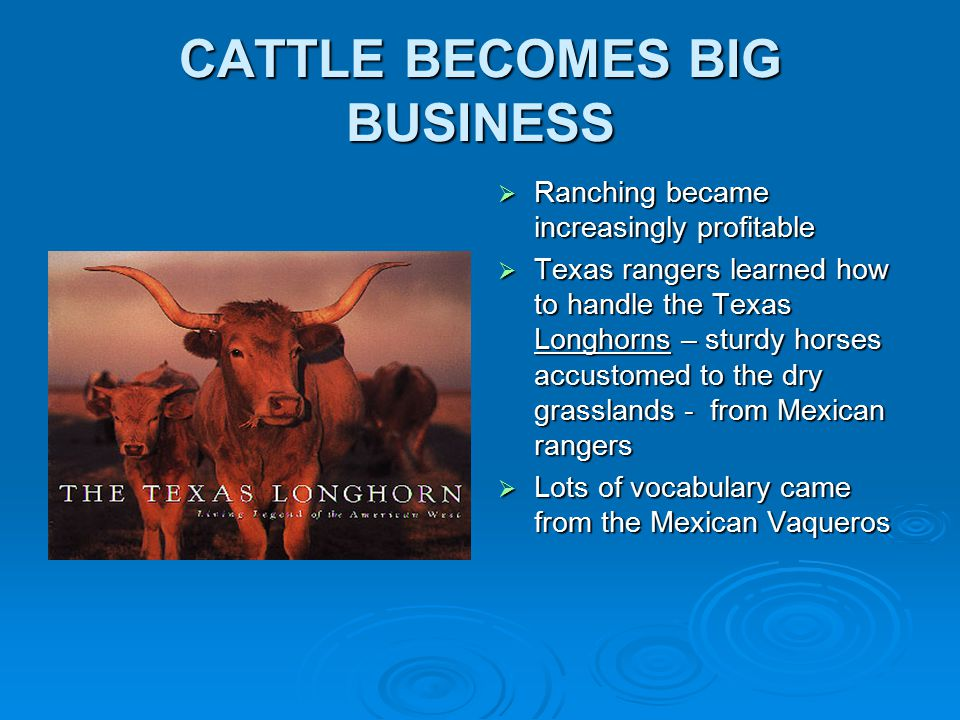 CATTLE BECOMES BIG BUSINESS  Ranching became increasingly profitable  Texas rangers learned how to handle the Texas Longhorns – sturdy horses accustomed to the dry grasslands - from Mexican rangers  Lots of vocabulary came from the Mexican Vaqueros