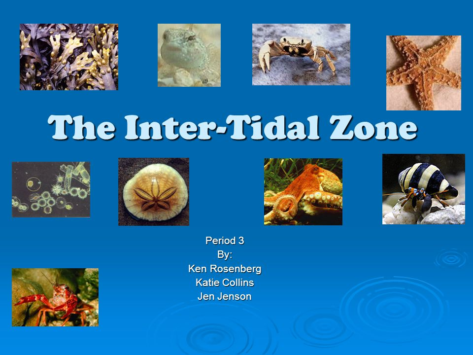 The Inter-Tidal Zone Period 3 By: Ken Rosenberg Katie Collins Jen Jenson