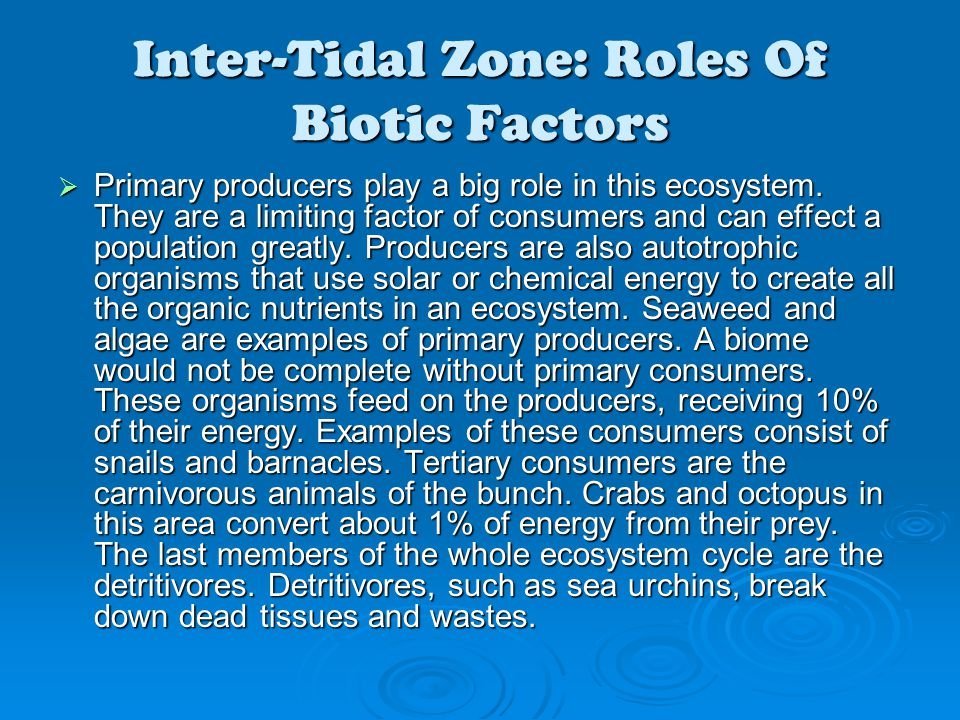 Inter-Tidal Zone: Roles Of Biotic Factors  Primary producers play a big role in this ecosystem. They are a limiting factor of consumers and can effec