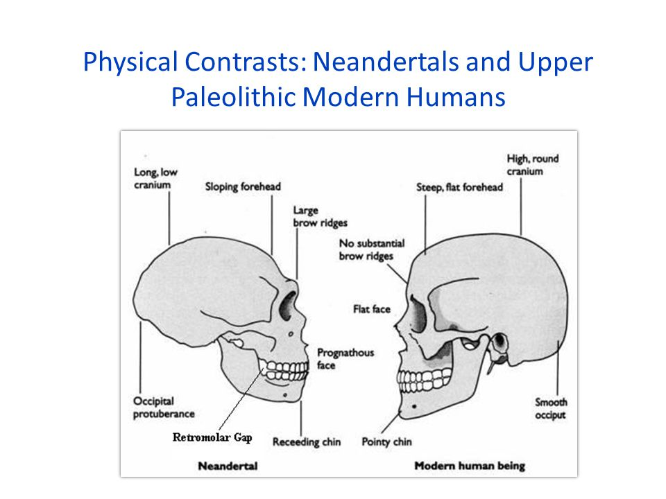 Physical Contrasts: Neandertals and Upper Paleolithic Modern Humans