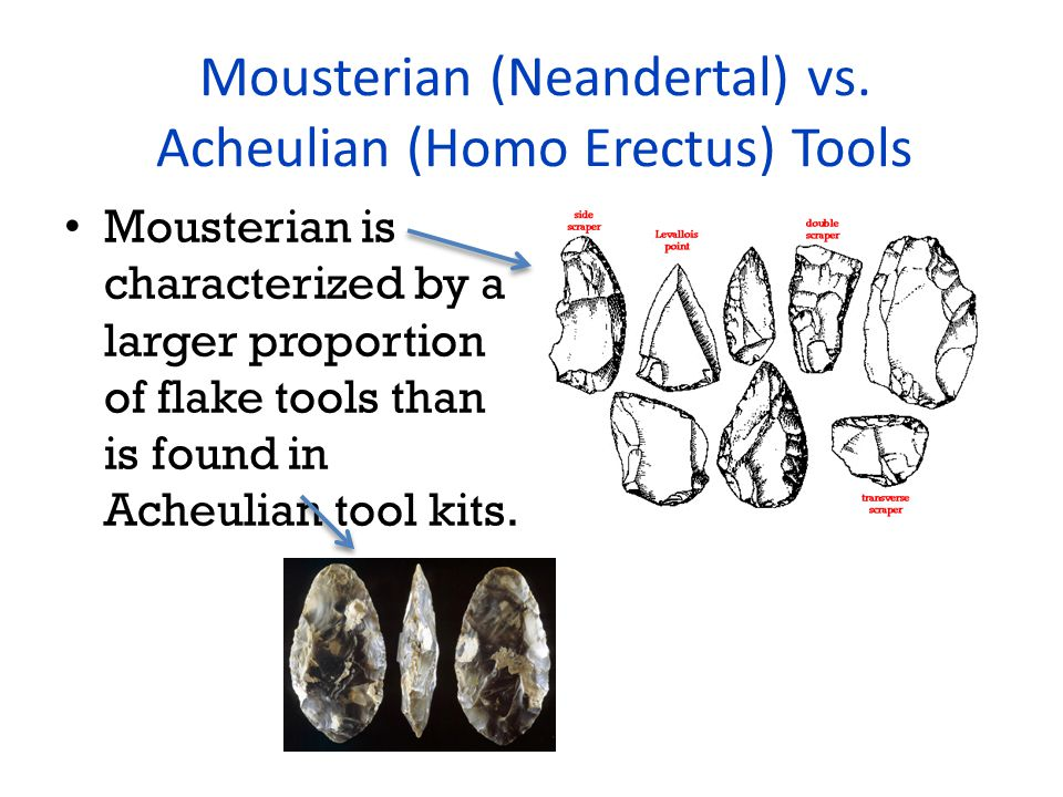 Mousterian (Neandertal) vs.