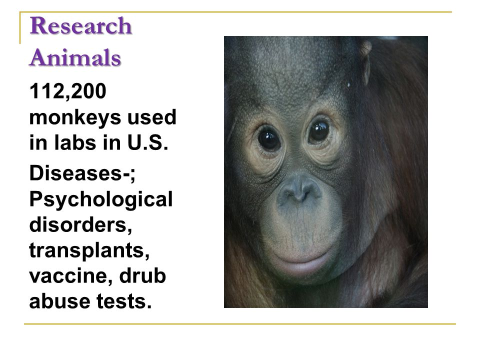 Research Animals 112,200 monkeys used in labs in U.S.