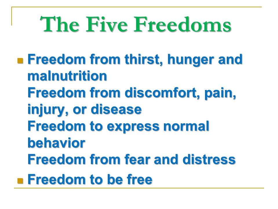 The Five Freedoms The Five Freedoms Freedom from thirst, hunger and malnutrition Freedom from discomfort, pain, injury, or disease Freedom to express normal behavior Freedom from fear and distress Freedom from thirst, hunger and malnutrition Freedom from discomfort, pain, injury, or disease Freedom to express normal behavior Freedom from fear and distress Freedom to be free Freedom to be free