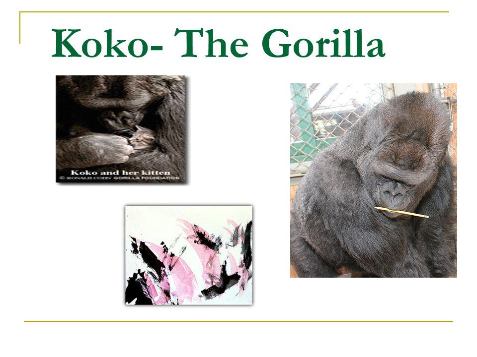 Koko- The Gorilla