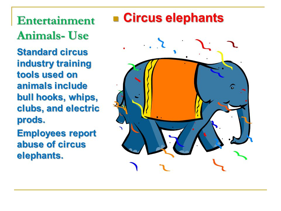 Entertainment Animals- Use Standard circus industry training tools used on animals include bull hooks, whips, clubs, and electric prods.