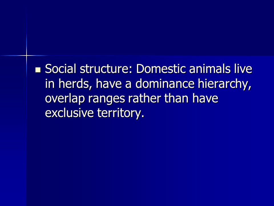 Social structure: Domestic animals live in herds, have a dominance hierarchy, overlap ranges rather than have exclusive territory.