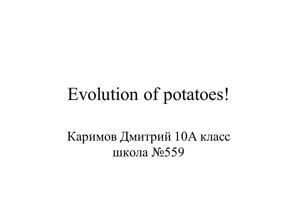 Evolution of potatoes! Каримов Дмитрий 10А класс школа №559
