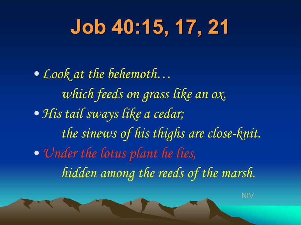Job 40:15, 17, 21 Look at the behemoth… which feeds on grass like an ox.