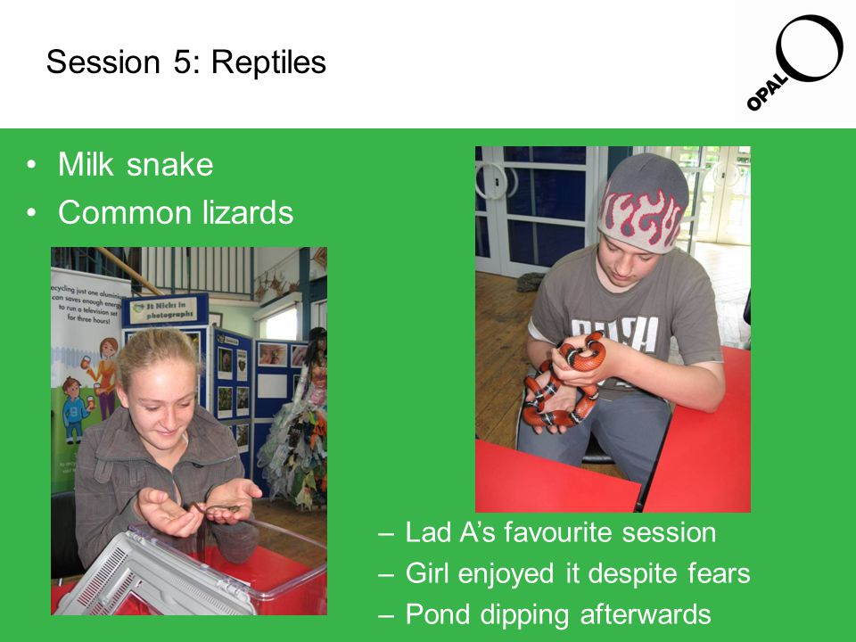 Session 5: Reptiles Milk snake Common lizards –Lad A's favourite session –Girl enjoyed it despite fears –Pond dipping afterwards