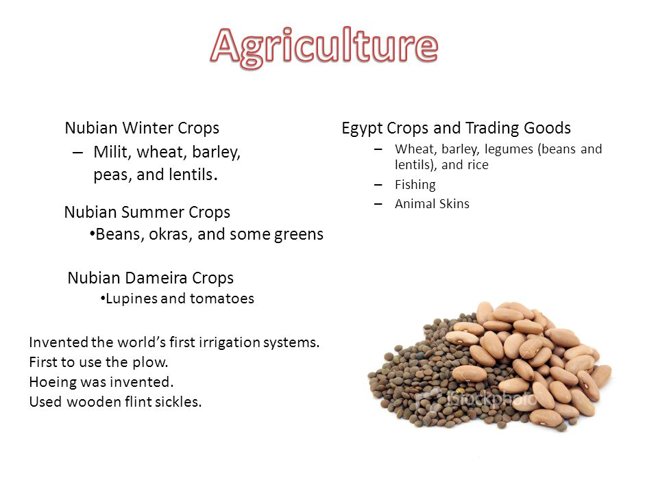 Nubian Winter Crops – Milit, wheat, barley, peas, and lentils. Egypt Crops and Trading Goods – Wheat, barley, legumes (beans and lentils), and rice –