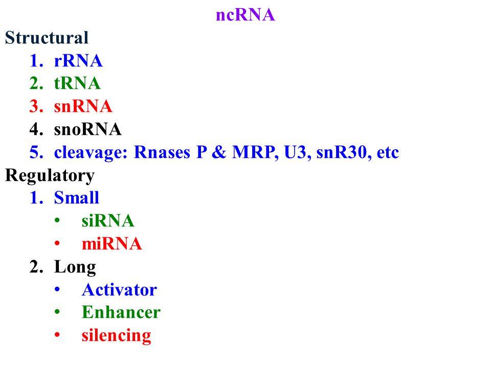 ncRNA Structural 1.rRNA 2.tRNA 3.snRNA 4.snoRNA 5.cleavage: Rnases P & MRP, U3, snR30, etc Regulatory 1.Small siRNA miRNA 2.Long Activator Enhancer silencing