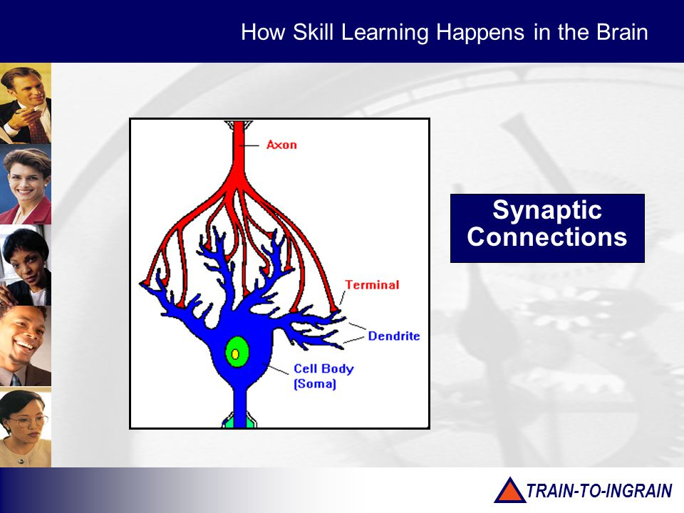 TRAIN-TO-INGRAIN Synaptic Connections How Skill Learning Happens in the Brain