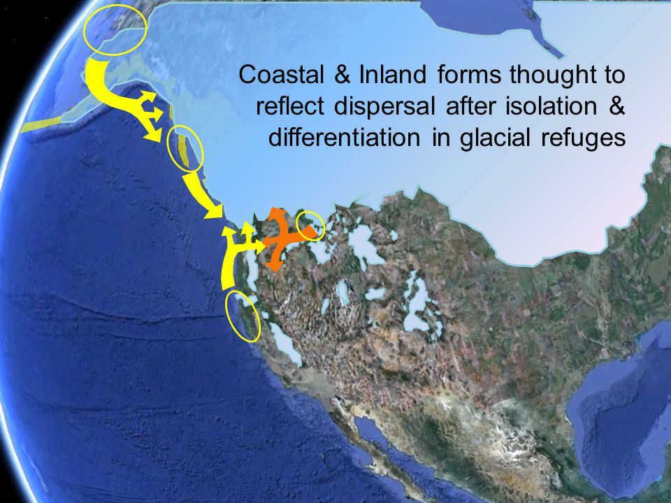 reflect Extant distribution does not simply reflect colonization to the south Coastal & Inland forms thought to reflect dispersal after isolation & di