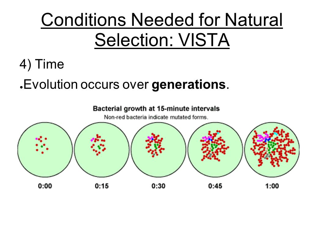 Conditions Needed for Natural Selection: VISTA 4) Time ● Evolution occurs over generations.
