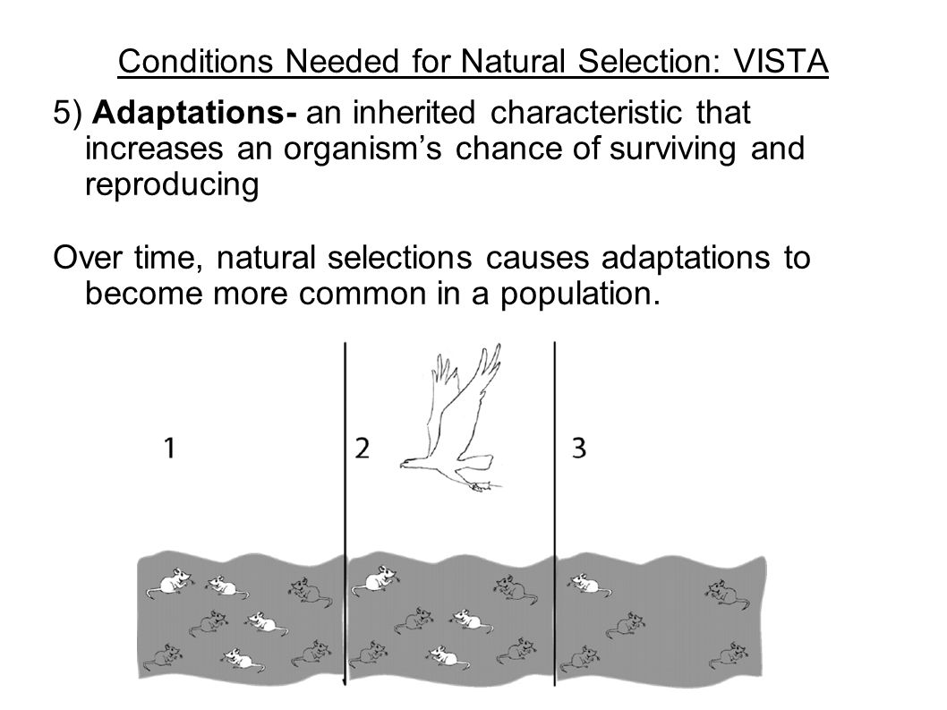 Conditions Needed for Natural Selection: VISTA 5) Adaptations- an inherited characteristic that increases an organism's chance of surviving and reprod