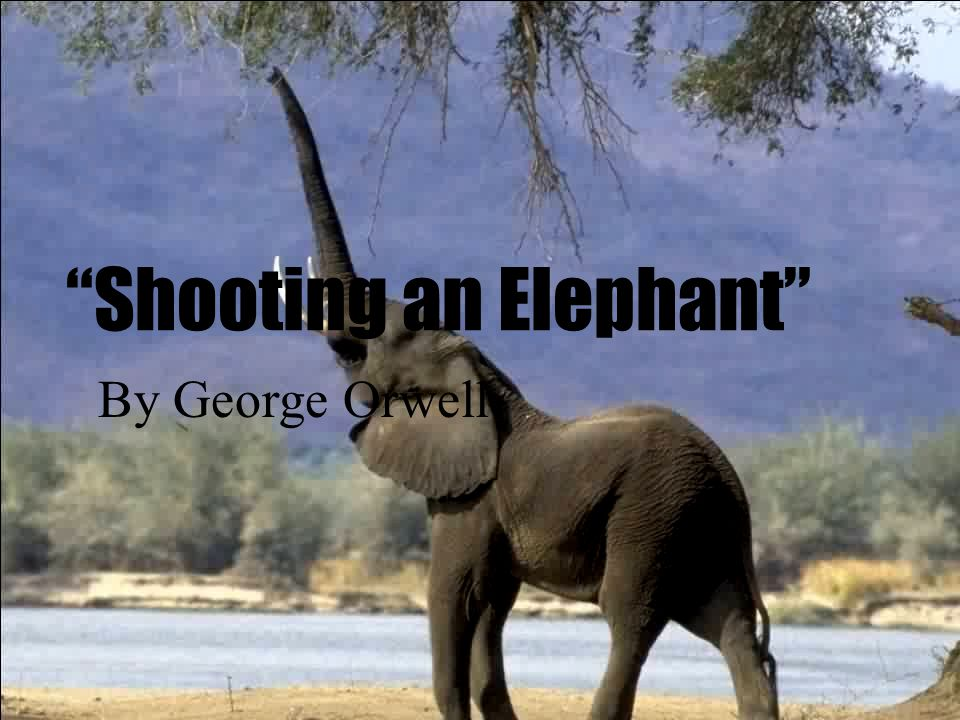 """""""Shooting an Elephant"""" By George Orwell"""