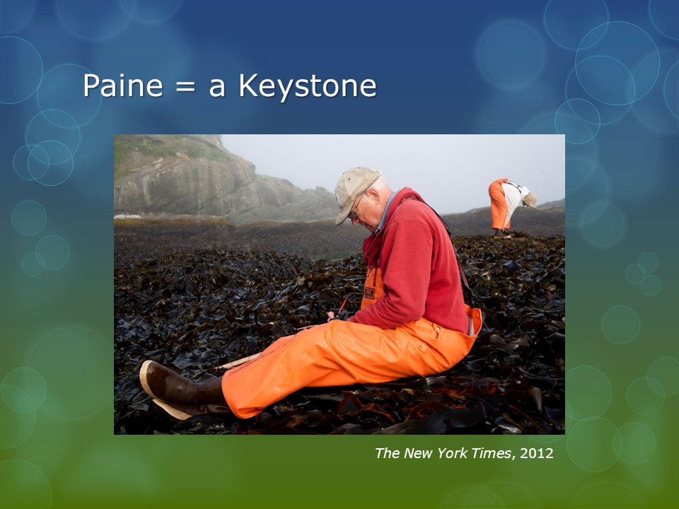 Paine = a Keystone The New York Times, 2012