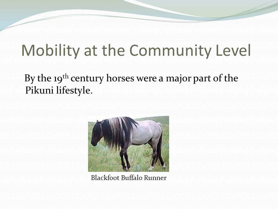 Mobility at the Community Level By the 19 th century horses were a major part of the Pikuni lifestyle.