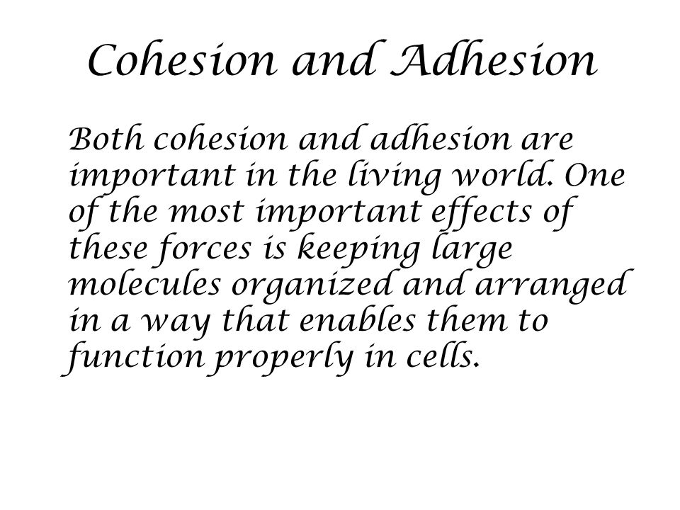 Cohesion and Adhesion Both cohesion and adhesion are important in the living world. One of the most important effects of these forces is keeping large