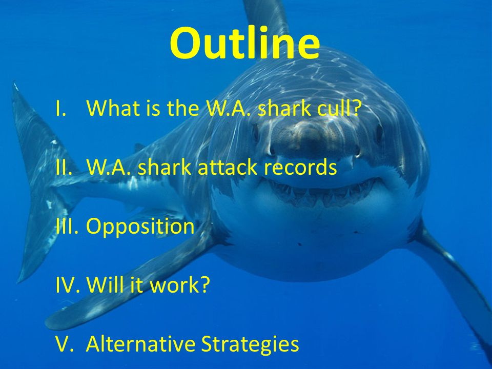 Outline I.What is the W.A. shark cull? II.W.A. shark attack records III.Opposition IV.Will it work? V.Alternative Strategies