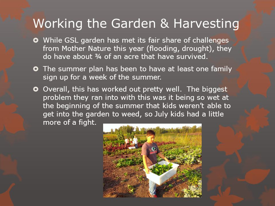 Working the Garden & Harvesting  While GSL garden has met its fair share of challenges from Mother Nature this year (flooding, drought), they do have about ¾ of an acre that have survived.