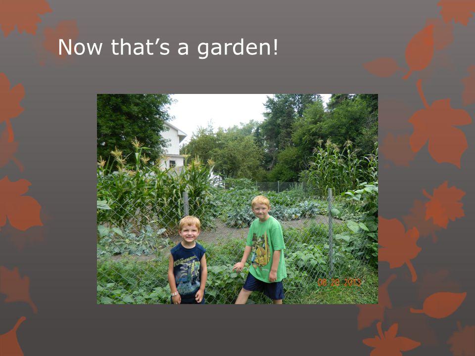 Now that's a garden!