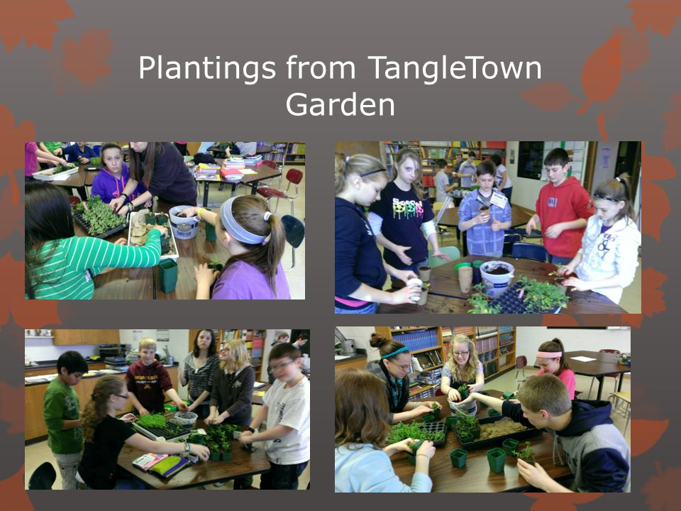 Plantings from TangleTown Garden