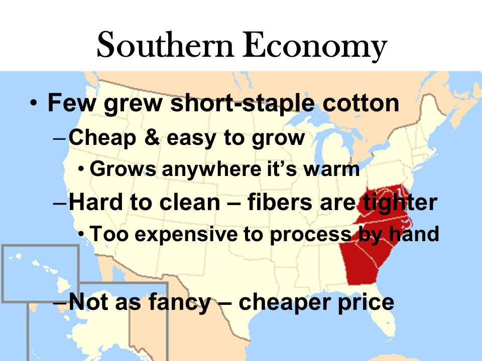 Southern Economy Few grew short-staple cotton –Cheap & easy to grow Grows anywhere it's warm –Hard to clean – fibers are tighter Too expensive to process by hand –Not as fancy – cheaper price