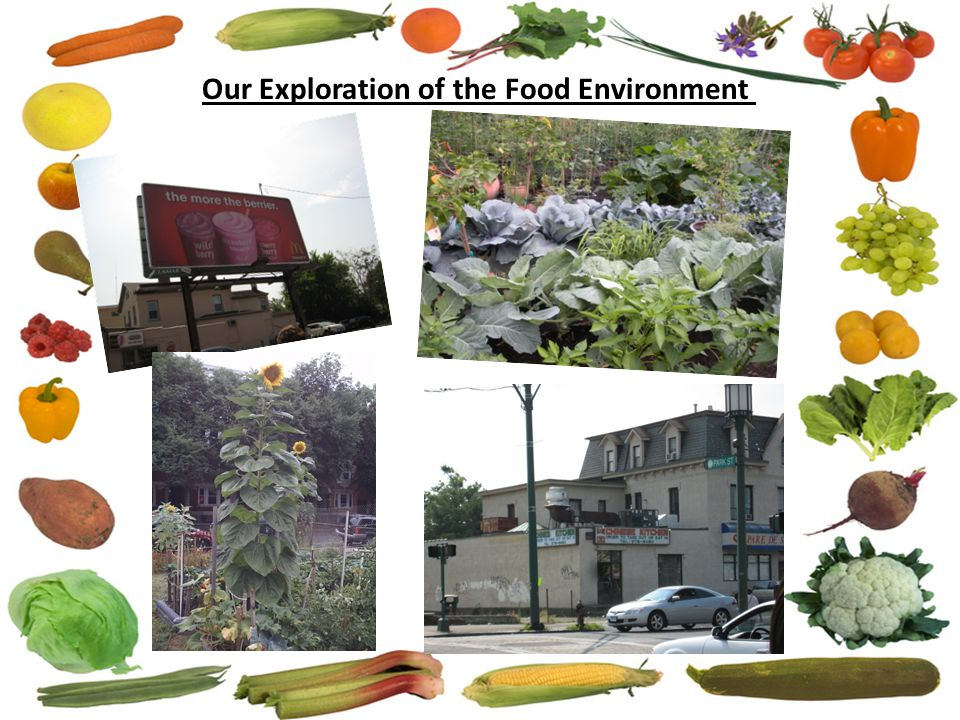 Our Exploration of the Food Environment