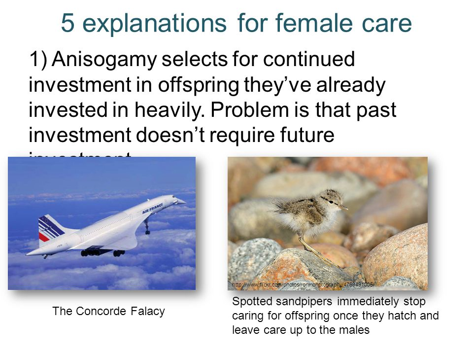 5 explanations for female care 1) Anisogamy selects for continued investment in offspring they've already invested in heavily. Problem is that past in