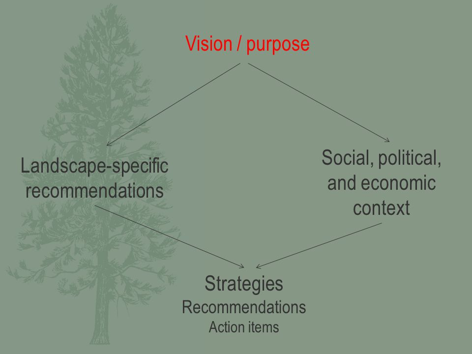 Strategies Recommendations Action items Vision / purpose Landscape-specific recommendations Social, political, and economic context