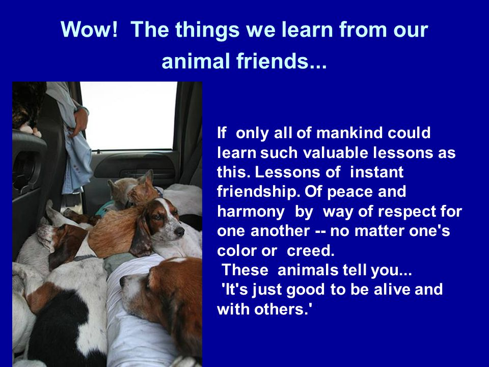 Wow. The things we learn from our animal friends...