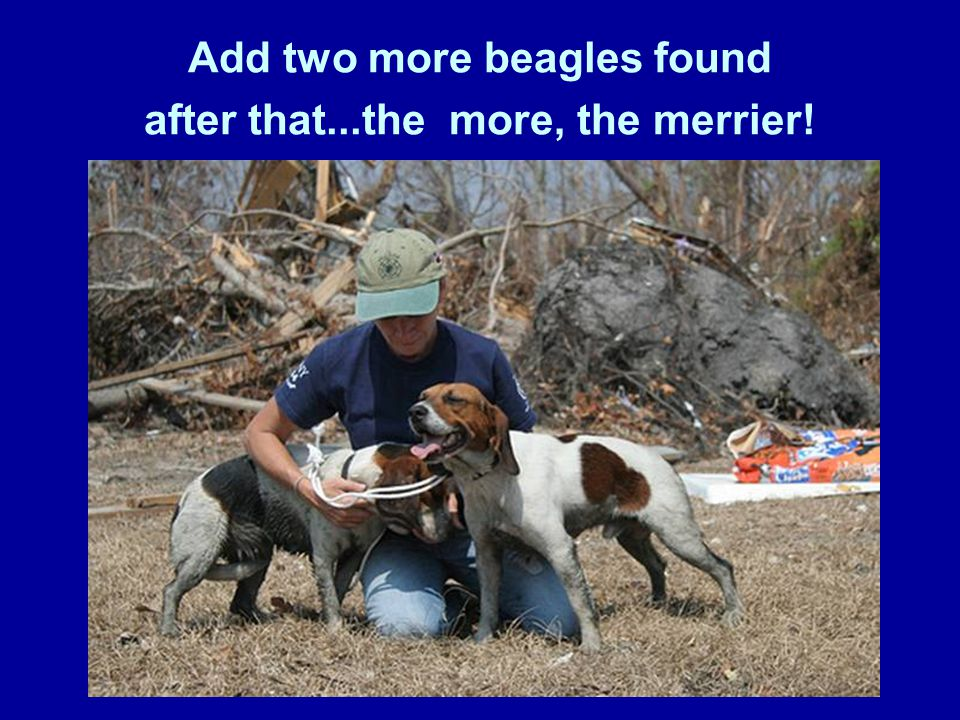 Add two more beagles found after that...the more, the merrier!