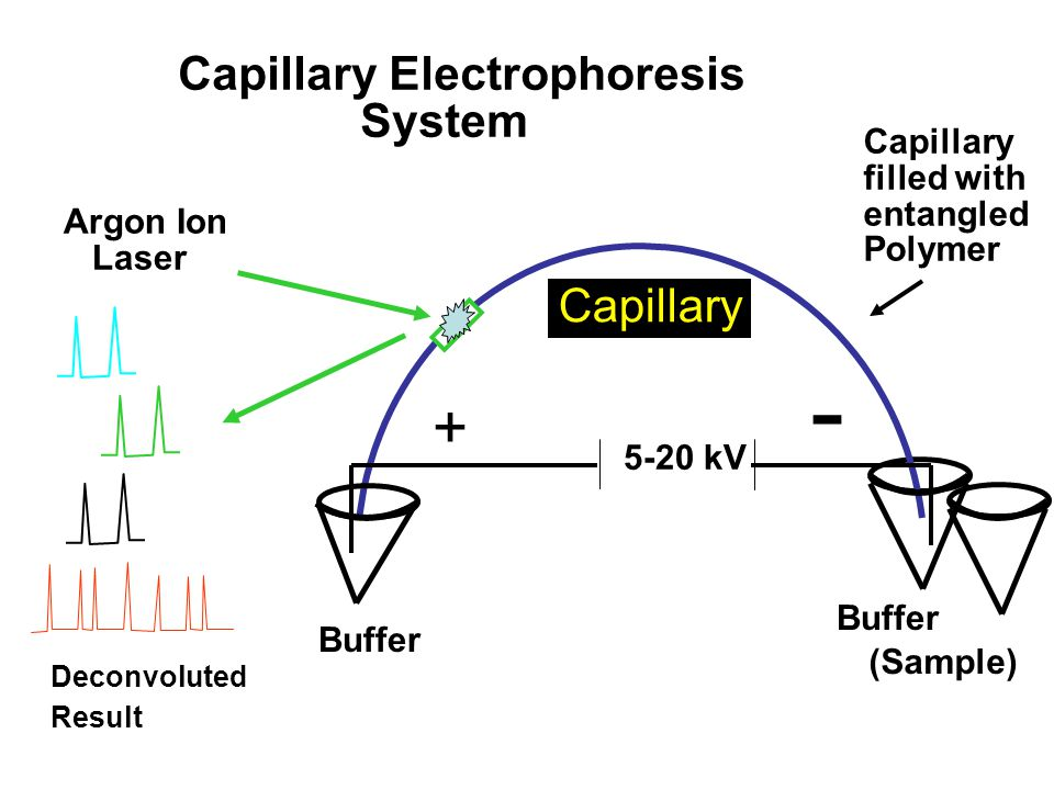 Capillary Electrophoresis System Buffer Argon Ion Laser Deconvoluted Result Capillary filled with entangled Polymer Buffer (Sample) 5-20 kV Capillary