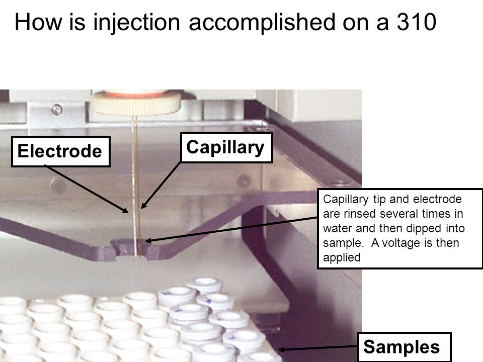 Capillary Samples Capillary tip and electrode are rinsed several times in water and then dipped into sample. A voltage is then applied How is injectio