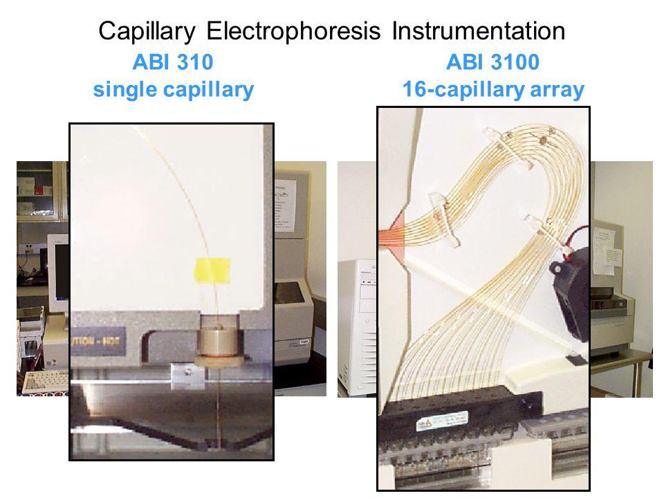 CCD Image of 16-Capillary Array