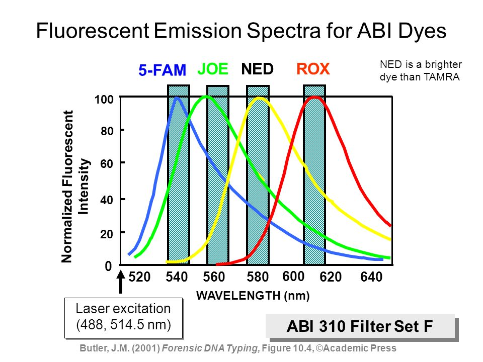 Virtual Filters Used in ABI 310 500 600 700 nm 525550575625650675 Filter A Filter C Filter F Filter G5 FL FAM TET VIC JOE HEX NED TMR PETROXLIZ Visible spectrum range seen in CCD camera Commonly used fluorescent dyes Filter sets determine what regions of the CCD camera are activated and therefore what portion of the visible light spectrum is collected Arrows indicate the dye emission spectrum maximum