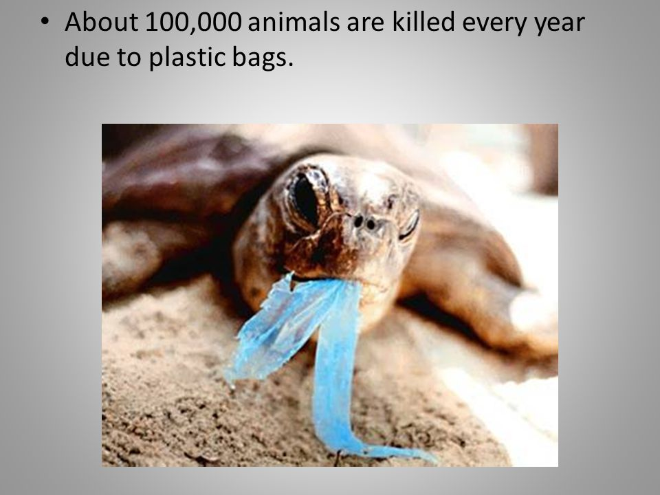 And one of the worst environmental effects of plastic bags is that they are non- biodegradable.