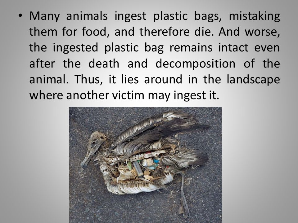 A study in 1975, showed ocean-going vessels dumped 8 million pounds of plastic waste each year.
