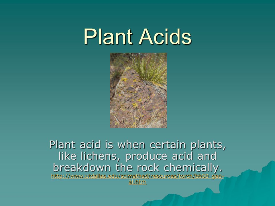 Plant Acids Plant acid is when certain plants, like lichens, produce acid and breakdown the rock chemically. http://www.utdallas.edu/scimathed/resourc